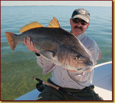 Fly fishing crystal river with capt kyle messier for Black drum fishing